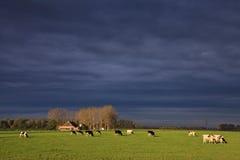 Ajardine com pastagem e exploração agrícola Imagens de Stock
