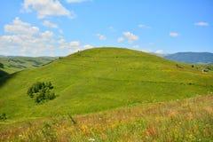 Ajardine com pastagem, o monte verde e o céu azul. Imagens de Stock Royalty Free