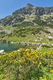 Ajardine com pico amarelo das flores e do Dzhangal, montanha de Pirin Fotografia de Stock Royalty Free