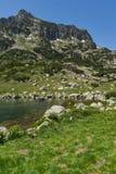Ajardine com pico amarelo das flores e do Dzhangal, montanha de Pirin Fotos de Stock