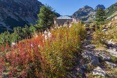 Ajardine com pico das flores e do Malyovitsa, montanha de Rila Fotografia de Stock Royalty Free