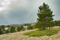 Ajardine com pinheiro e o zimbro verde na inclinação Imagem de Stock Royalty Free
