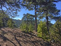 Ajardine com pinheiros e o céu azul em montanhas de Troodos em C Fotografia de Stock