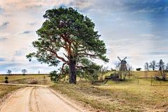 Ajardine com pinho e a estrada sós do campo na mola Imagens de Stock