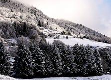 Ajardine com pinho e larício do abeto no inverno Imagem de Stock