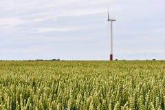 Ajardine com plantas do trigo em um campo na frente de uma turbina eólica Imagem de Stock Royalty Free