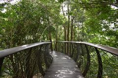 Ajardine com a ponte famosa do ferro no jardim botânico em Cape Town em África do Sul Foto de Stock