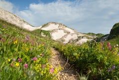 Ajardine com prado dos wildflowers e trajeto nas montanhas de Cáucaso, Rússia Fotografia de Stock Royalty Free