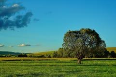 Ajardine com prado e o céu azul nebuloso 2 Foto de Stock Royalty Free