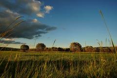 Ajardine com prado e o céu azul nebuloso 3 Fotos de Stock