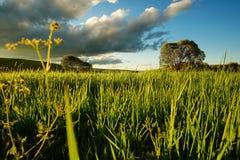 Ajardine com prado e o céu azul nebuloso 4 Fotos de Stock
