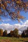 Ajardine com ramo de árvore do bordo com as folhas amarelas contra o céu azul Fotos de Stock