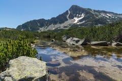 Ajardine com reflexão do pico em lagos Banski, montanha de Sivrya de Pirin Foto de Stock