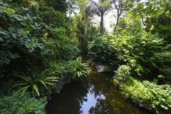 Ajardine com rio, árvore e grama verde na mola Fotografia de Stock