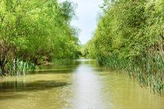Ajardine com rio tropical Fotos de Stock