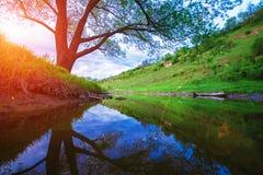 Ajardine com rocha, árvore e rio no por do sol Fotos de Stock