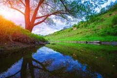 Ajardine com rocha, árvore e rio no por do sol Imagens de Stock