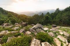 Ajardine com a rocha na floresta no por do sol, montagem da opinião superior da paisagem Fotografia de Stock