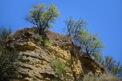 Ajardine com rochas e arbustos em Provence, ao sul de França Foto de Stock Royalty Free