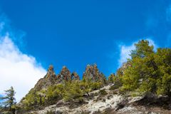 Ajardine com rochas e as árvores coníferas, Nepal Imagem de Stock