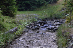 Ajardine com rochas, pedras e rio das montanhas que corre através da floresta do pinheiro com as cachoeiras no tempo do outono an Fotografia de Stock Royalty Free