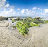 Ajardine com rochas verdes encalham, o mar e o clou bonito Fotos de Stock