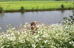 Ajardine com salsa de vaca e o rio de Linge, seja Imagens de Stock Royalty Free