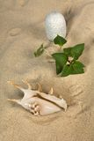 Ajardine com seashell e pedras no céu Fotografia de Stock Royalty Free