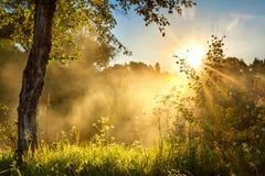Ajardine com sol e floresta e prado no nascer do sol Foto de Stock