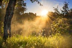 Ajardine com sol e floresta e prado no nascer do sol Imagem de Stock