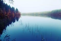Ajardine com threes em uma costa, em uma névoa e ainda em um lago Fotografia de Stock