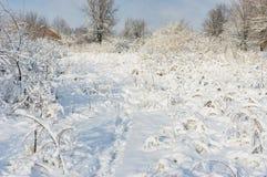 Ajardine com trajeto para dirigir dentro a neve profunda e fresca Fotos de Stock