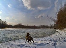 Ajardine com um cão no banco do rio do inverno Imagens de Stock