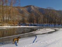 Ajardine com um cão no banco do rio do inverno Imagem de Stock