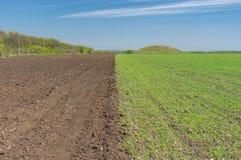 Ajardine com um campo agrícola dividido na seção dois - as colheitas arávéis uma uma e do inverno Foto de Stock