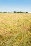 Ajardine com um campo com fundido abaixo da grama para a semente da grama Fotos de Stock Royalty Free