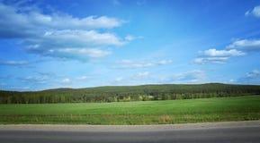 Ajardine com um campo da grama, do céu azul e da floresta do pinho Imagens de Stock Royalty Free