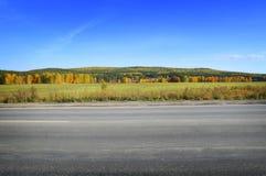 Ajardine com um campo da grama, do céu azul e da floresta do pinho Foto de Stock Royalty Free