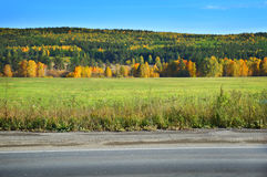 Ajardine com um campo da grama, do céu azul e da floresta do pinho Fotos de Stock Royalty Free