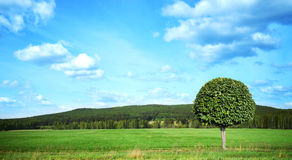 Ajardine com um campo da grama, do céu azul e da floresta do pinho dentro Fotos de Stock