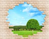 Ajardine com um campo da grama e da floresta do pinho dentro Imagens de Stock