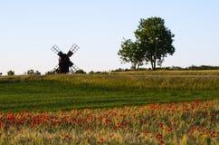 Ajardine com um campo das papoilas e de um moinho de vento velho Foto de Stock