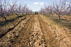 Ajardine com um campo de árvores de florescência Fotografia de Stock Royalty Free