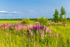 Ajardine com um campo de flores coloridas no por do sol Fotos de Stock Royalty Free