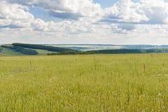 Ajardine com um campo de trigo nos montes Fotografia de Stock Royalty Free