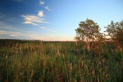 Ajardine com um campo sob um céu bonito Imagem de Stock