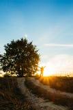 Ajardine com um carvalho e um homem no fundo do por do sol Fotografia de Stock