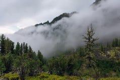 Ajardine com um cedro seco coberto de vegetação com o líquene Fotos de Stock Royalty Free
