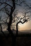 ajardine com um contorno de uma árvore na luz do por do sol Foto de Stock Royalty Free
