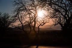 ajardine com um contorno de uma árvore na luz do por do sol Fotos de Stock